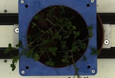 crop_EPPN-03114_tv_0_0_0